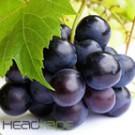 Grape Ape eJuice