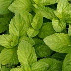 Spearmint eJuice